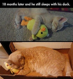 18 Months Later He Still Loves His Duck!!
