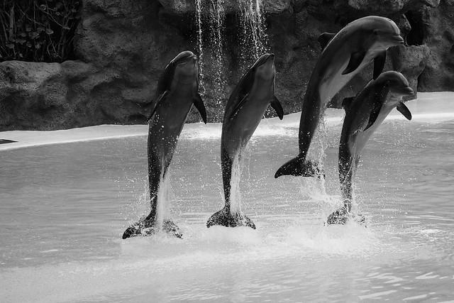 P3081508_delfine-2