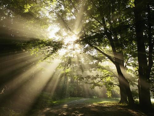 Frases Da Semana Dia Mundial Da árvore Be Castanheira De Pera