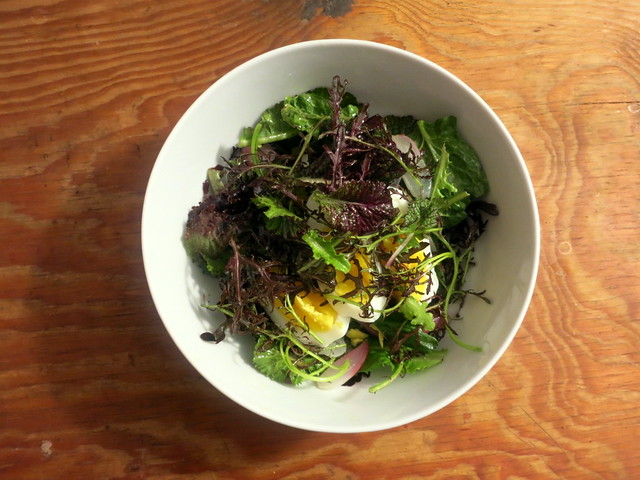 Spring lettuce salad, with French breakfast radishes and egg