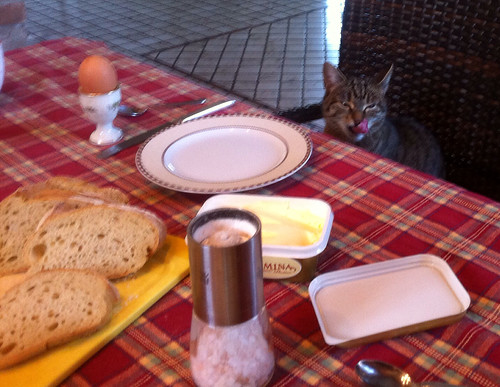 Breakfast for my cat