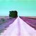In Them Old Cotton Fields Back Home - 002 (Film Version) by Lon Casler Bixby
