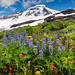 Mt Baker Wildflowers by EdBob