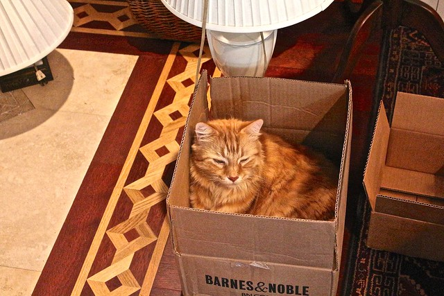 I Ordered a DVD about Maine Coon Cats