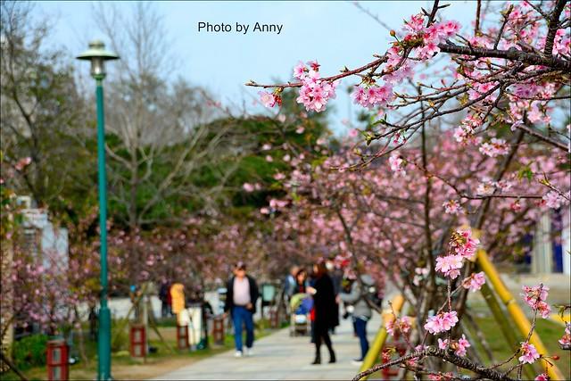 麗池櫻花13
