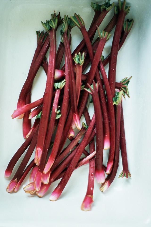rhubarb jam-1