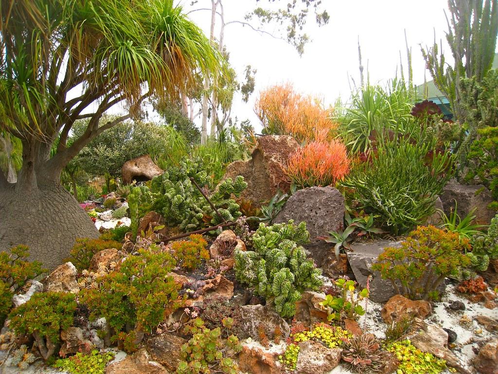 Underwater Succulent Garden