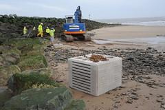 愛爾蘭的實驗:有別於傳統消波塊的「生物塊磚」(bioblocks)。SEACAMS公司提供。