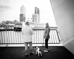 met de hond naar de cruiseboot kijken
