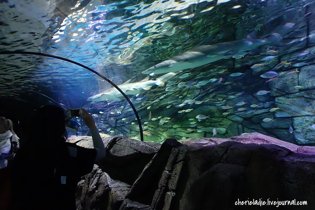sharks viewing tunnel