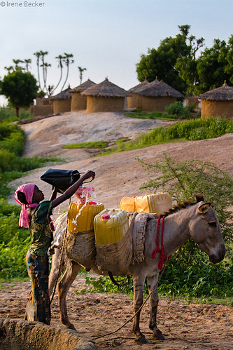 africa sunset people girl village sundown donkey well portraiture westafrica nigeria collecting sahel katsina watercollection blackafrica arewa northernnigeria hausapeople irenebecker nigerianimages nigerianphotos imagesofnigeria northnigeria workingpeole irenebeckereu
