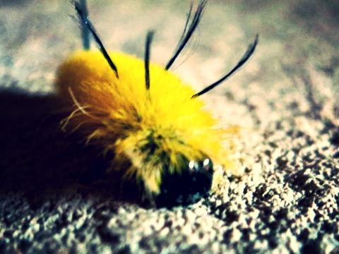 caterpillar-1013