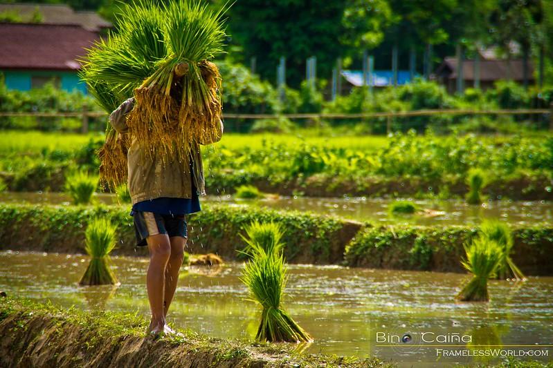 Farmer in Vang Vieng
