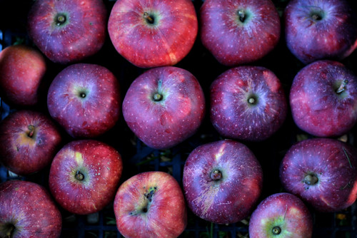 almaszuret02