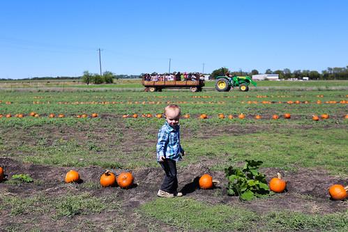 Big Orange Pumpkin Farm-17.jpg