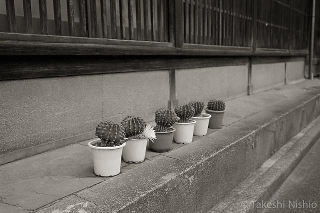 サボテンの花 / cactus flower