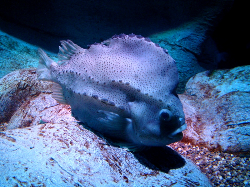 Ripley's Aquarium fish