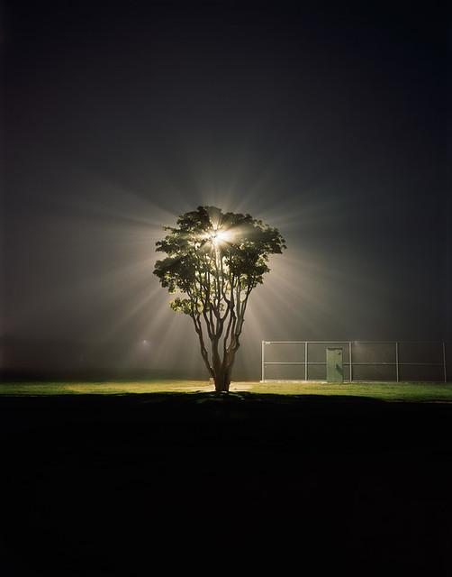 Amanda Friedman, Tree, Marina Del Rey, CA