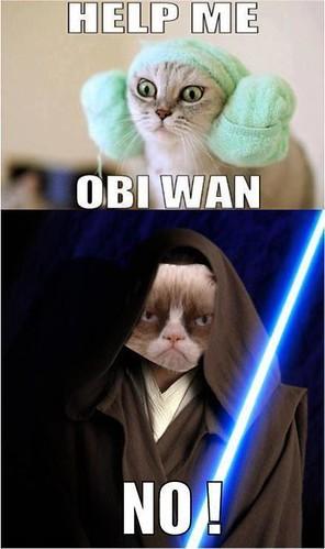Obi Wan Grumpy Cat
