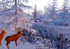 ReBourne Winter Wonderland Photo Contest