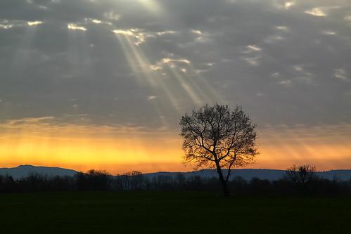 morning cloud sun mist tree clouds rural early solitude day ray loneliness cloudy greece macedonia lonely sunray sunup grevena δέντρα σύννεφα agapi δέντρο αυγή πρωί σύννεφο αγάπη εξοχή επαρχία ventzi μοναξιά ξημέρωμα μακεδονία φωσ ήλιοσ γρεβενά ακτίνεσ ηλιακό ακτίνα ηλιακτίδα βέντζι μούχρωμα ακτίδα καλόχι kalochi kaloxi λξ