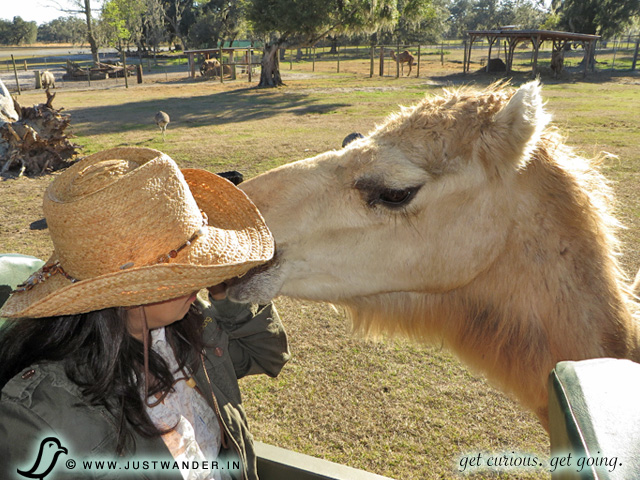 PIC: Maya of JustWander.in with a Camel at Giraffe Ranch