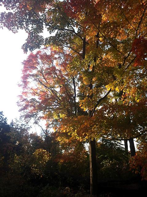BBG President's Circle members enjoyed a bounty of autumn events in 2013. Photo by Kate Douglass and Tiffany Bernardo.