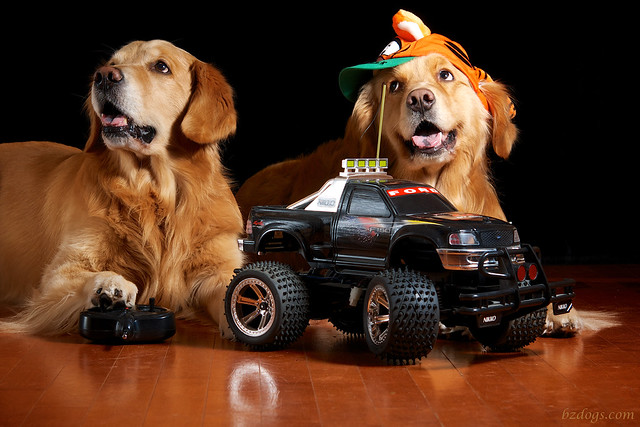 Dogs Love Trucks