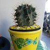 So prickly #Cactus #yellow