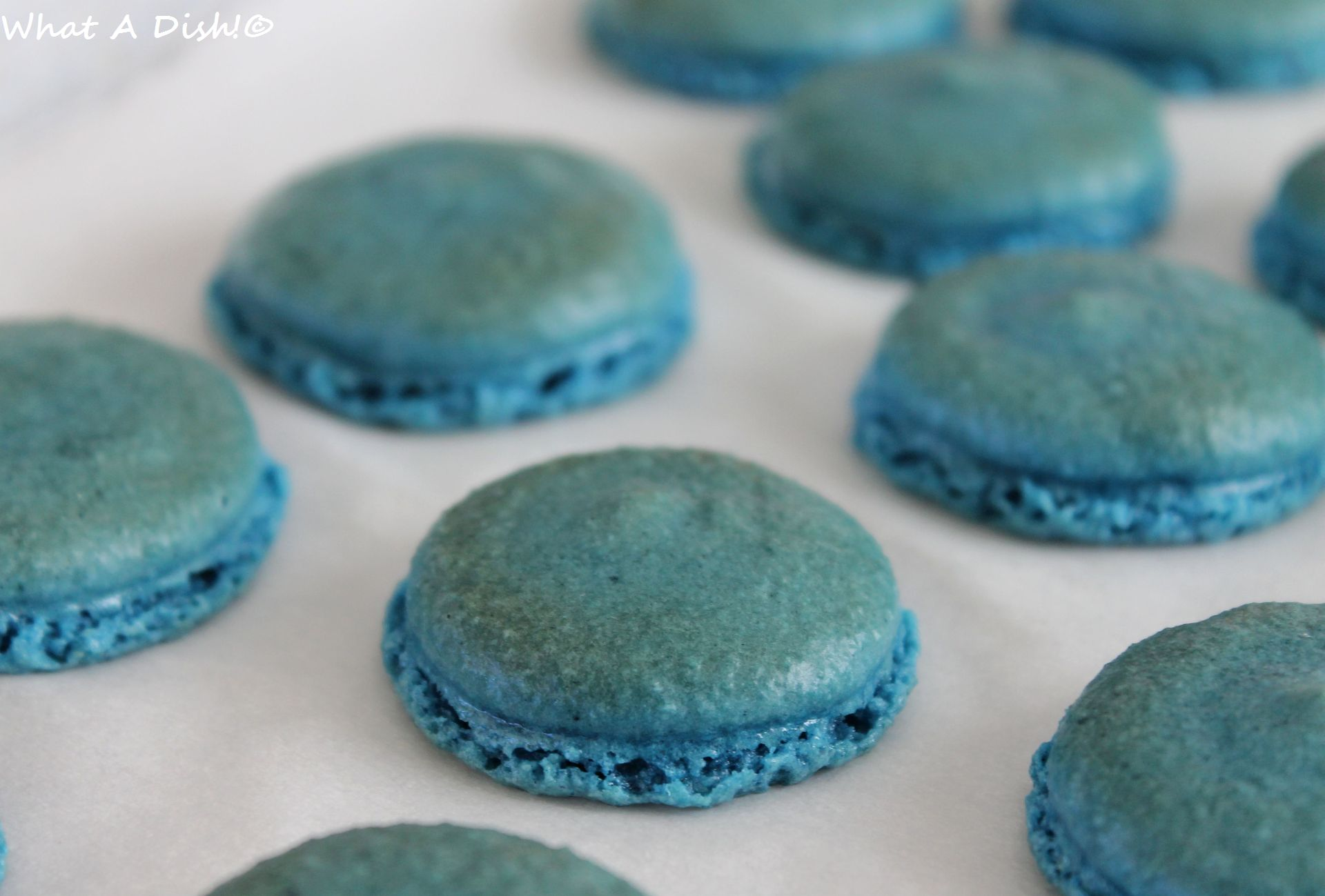 Blue Macaroons Shells
