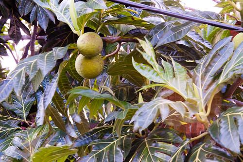 Antigua-2014-02-02-7852.jpg
