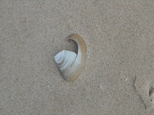 shell (1)