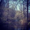 Springing. #virginia #running #creek