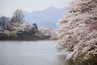 Blossom Scenery