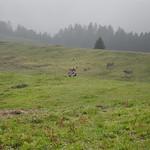 090912 Tanzboden