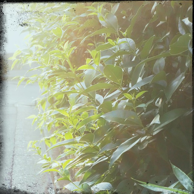 Shining through green leaves