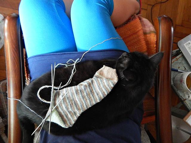 вяжу полосатый носок, а кот Муся сидит на ручках