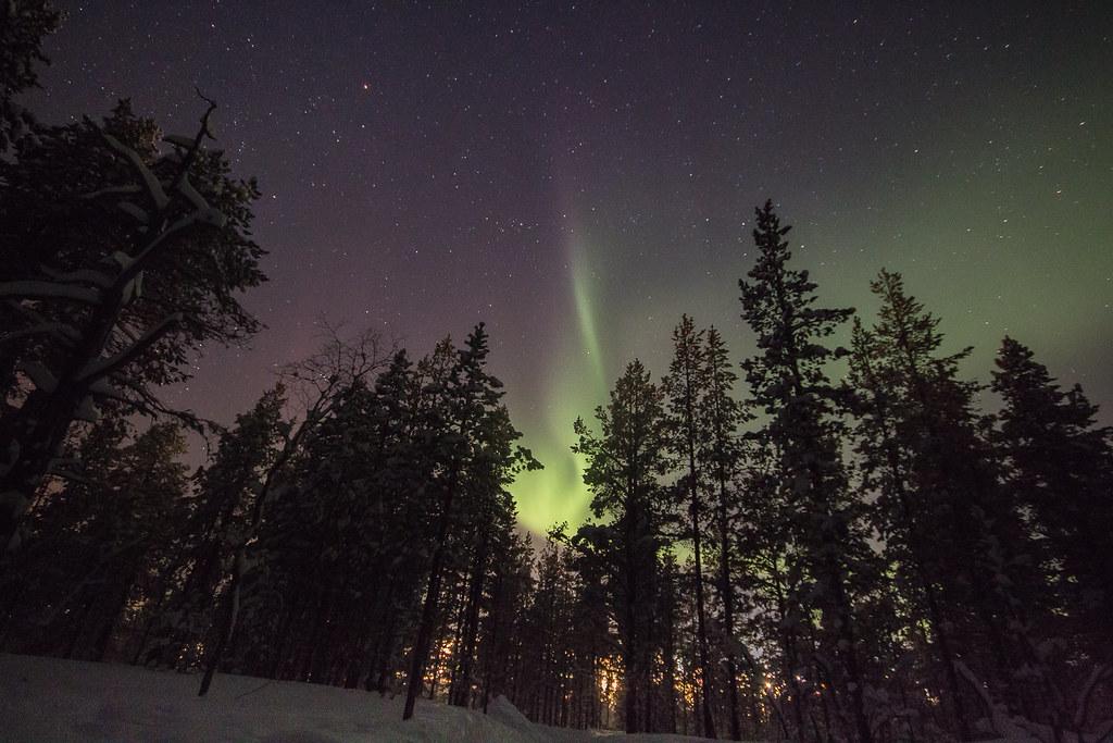 Auroras Boreales en el bosque de abetos de Saariselka Laponia Finlandesa