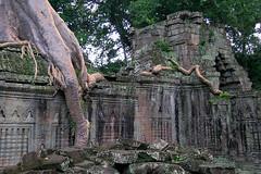 Preah Khan - The Jungle Rules