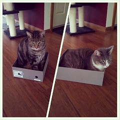 New shoes for me, new box for cats. Not pictured: the wrestling match between these shots. #catsofinstagram