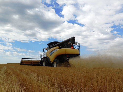 Back view of the combine cutting