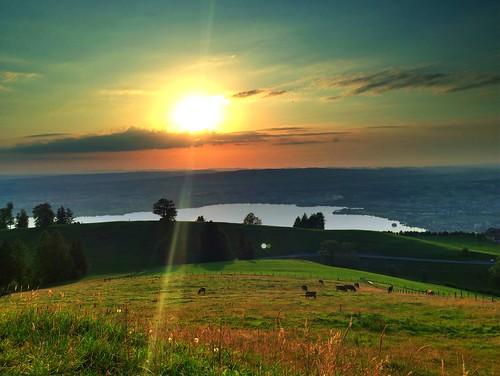 sun lake schweiz switzerland see cows suisse suiza zug jura svizzera sonne aargau hdr kühe zugersee zugerberg hochwacht iphone5