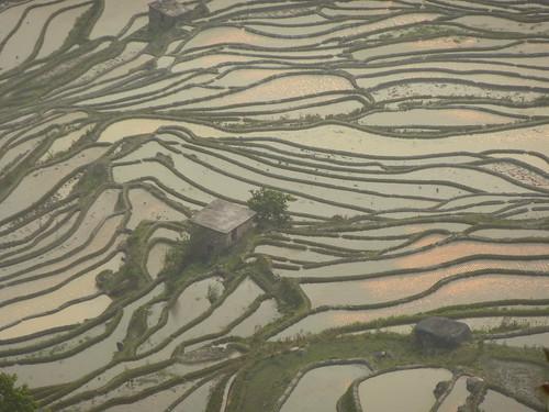 Yunnan13-Yuanyang 24-Bada (56)