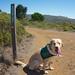 Kalani at Baquiano Trail