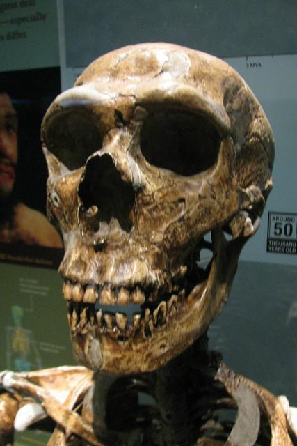 Neanderthal definition...