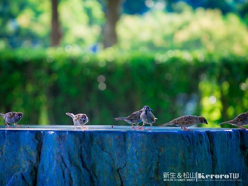 2013-09-14 新生公園&松山文創 附近晃晃