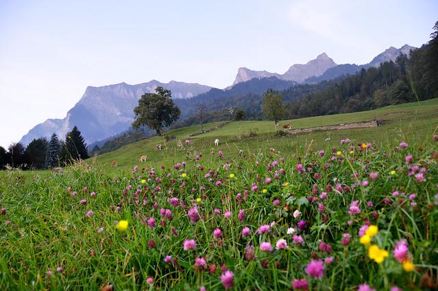 Montañas de Maienfeld hacia la casita de Heidi