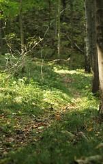 Waldspaziergang im September