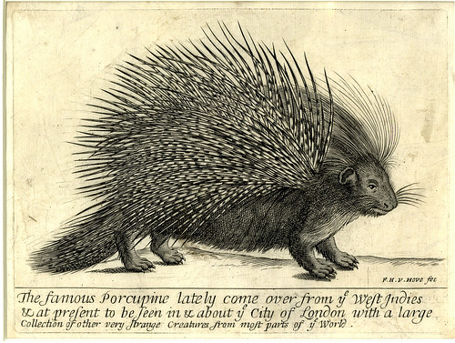 Frederick Hendrik Van Hove, The famous Porcupine, engraving,