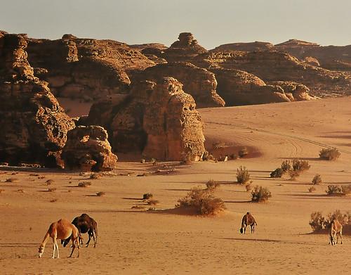 flickriver photos from deserto ceara brazil